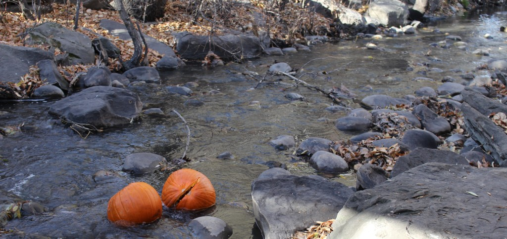 Pic of pumpkins in water - Time only flows one way, and I ran out of it...